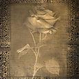 Rose_3_copy