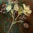 Botanicablog1009