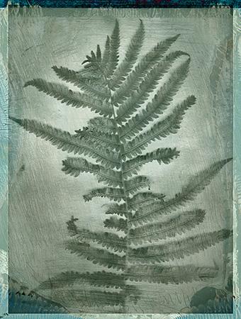 Botanical_999